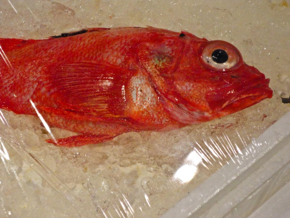 fish-market-21